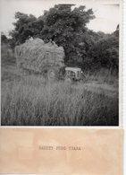 Photo Madagascar Années 1950,Moisson.Tirage Argentique Original Format 12/17. - Métiers
