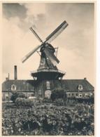 Nederland - 1946 - 5 Op 7,5 Cent Fotokaart G285v - Roderwolde, Oliemolen - Ongebruikt - Postwaardestukken