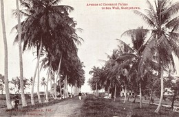 British Guiana, GEORGETOWN, Avenue Of Cocoanut Palms To Sea Wall 1910s Postcard - Other