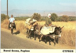 Donkeys, Rural Scene, Neon Chorion, Paphos, Cyprus - Cipro
