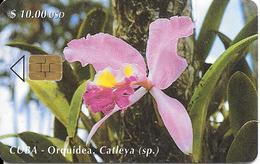 CARTE PUCE-CUBA-ETECSA--10USD -ORQUIDEA-R°Glacé-UTILISE-TBE-RARE - Fleurs
