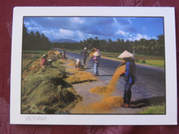 """Vietnam 2009 Postcard """"rice Harvest Drying"""" Ho Chi Minh To England - Fishes - Furnitures Lamp - Vietnam"""