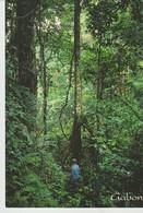 CP - LE GABON EN TROPICOLOR - SENTIER PRES DE LONGO - EN FORET PRIMAIRE - A 695 K - TROPICOLOR - Gabón