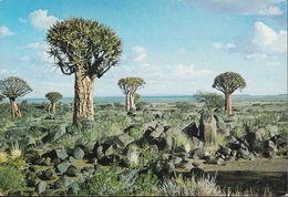 South Africa - Kokerbaum - Quiver Tree - Nice Stamp - Südafrika