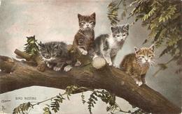 """Four Cats In Bird Nesting Tree"" Tuck Photochrome Happy Catland Ser. PC # 4722 - Quinton, AR"