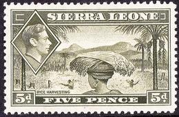 SIERRA LEONE 1956 5d Olive-Green SG194 MH - Sierra Leone (...-1960)