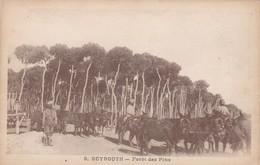 CARTOLINA - POSTCARD - LIBANO - BEYROUTH - FOREST DES PINS - Libano