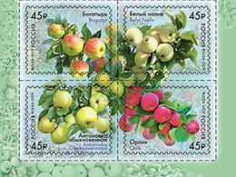 2019-2456-2459 4v-bottom Russia FLORA: FRUITS: Strains Of Apple Trees Mi 2673-2676 MNH - 1992-.... Fédération