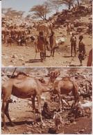 Afrique - Kenya - Chameliers Avec Des Dromadaires Et Chèvres - 176X130 - Africa