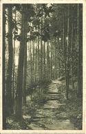 Appiano Gentile (Como) Pineta, Pinede, Pine Forest - Como