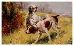 Dog , Springer Spaniel - Dogs
