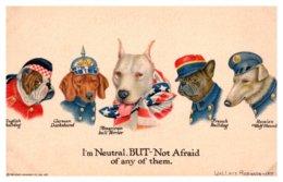 Dog WWI International Dogs Patriotic - Dogs