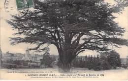 ARBRES - 77 - MONTIGNY LENCOUP : Cèdre Du Liban Planté Par Bernard De Jussieu En 1734 - CPA Tree Arbre Bome Boom Albero - Arbres