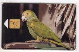 ANTILLES NEERLANDAISES BONNAIRE REF MV CARDS BON-10   PARROT - Antilles (Neérlandaises)