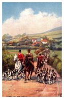 Dog   Fox Hunting Hounds - Dogs