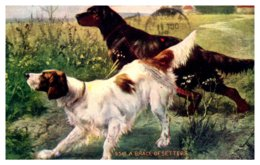 Dog Setter And Pointer - Dogs