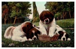 Dog   St.Bernard Puppies - Dogs