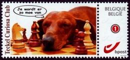 Schach Chess Ajedrez échecs - Belgiien Belgie Belgium - Teckel Curiosa Club - Dackel - MiNr 4228 - Sellos Privados