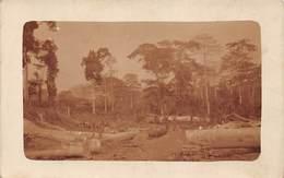 Congo Belge Postcard Jungle Logs Work Rail Sepia Real Photo - Cartes Postales