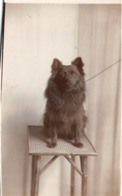 R128681 Old Postcard. Dog On The Chair. Shepherds - Cartes Postales