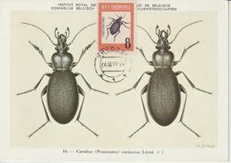 Albanie Carte Maximum 1963 Insectes 618 - Albania