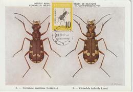 Albanie Carte Maximum 1963 Insectes 619 - Albania