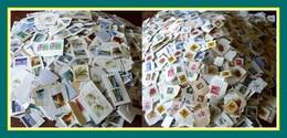 3,300 KILO (s) Nouvelle Zélande / Frag New Zealand Kiloware - Stamps
