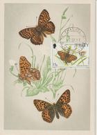 Jersey Carte Maximum 1991 Papillons 543 - Jersey