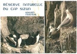 29 - Réserve Michel-Hervé Julien Du Cap Sizun En  Goulien ... Guillemots... Mouettes- éd. JOS / IRIS N° MX R. 297 - Francia