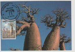 Madagascar Madagaskar 1991 Mi. 1307A Carte Maximum Petits Baobabs Trees Arbres Bäume Flora - Madagascar (1960-...)