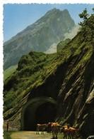 CPSM (65) Route Du Col D'aubisque, , Tunnel,et Le Grand Gabizo, Vache Sur La Route, écrite, Timbrée - Autres Communes