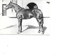 CARTE POSTALE CHEVAL PUB - Pferde