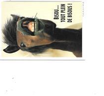 CARTE POSTALE CHEVAL VOYAGEE - Cavalli
