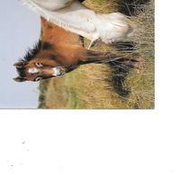 CARTE POSTALE CHEVAL VOYAGEE - Pferde