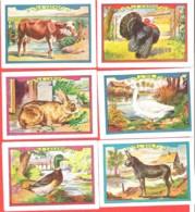 Lot 6 Chromos Bon Point Animaux De La Ferme Vache, Oie,Ane, Dindon, Lapin Canard - Chromos