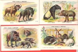 Lot 4 Chromos Bon Point Animaux Sauvages Et Domestiques, Tapir, Bison, Lapin, Sanglier - Chromos