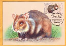 2019 Moldova Moldavie Red Book.Maxicard  European Hamster (Cricetus Cricetus). - Roedores