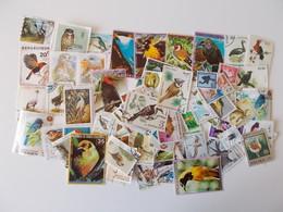 Lot # 18 - 100+ Vogels: Oiseaux, Birds Worldwide Off Paper, Vrac, Kilowaar Niet Getrieerd, Lot Zoals Op Foto - Oiseaux