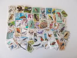 Lot # 21 - 100+ Vogels: Oiseaux, Birds Worldwide Off Paper, Vrac, Kilowaar Niet Getrieerd, Lot Zoals Op Foto - Oiseaux