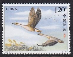 2.- CHINA 2018 BIRDS - WILD GOOSE - Oies