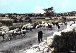 07 - ST REMEZE : Troupeau De Moutons  - CPSM GF 1965 ( Courrier Adressé à Michez JAZY Coureur De Demi-fond ) Ardèche - Frankrijk