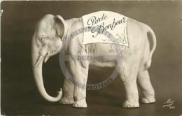/!\ 9859 - CPA/CPSM/PHOTO - Eléphant Porte-bonheur - Elephants