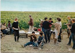 CHAMPAGNE GONET PERE Et FILS / . LE MESNIL - Sur - OGER (. 51.  Marne )  SCENE DE VENDANGES AU MESNIL / ANIMATION - France
