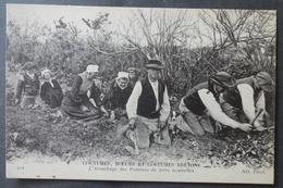 CPA 29 - CMCB 221 - L'Arrachage Des Pommes De Terre Nouvelles - Coutumes Moeurs Et Costumes Bretons - France