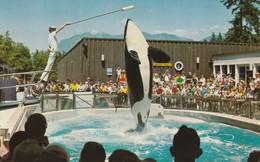 Vancouver Public Aquarium, Stanley Park, Vancouver, British Columbia Skana  Killer Whale Performing - Vancouver