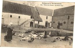 Scène De La Vie Normande - Visite A La Ferme - La Basse Cour   42 - Basse-Normandie