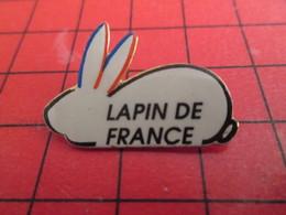 611b PIN'S PINS / Rare Et De Belle Qualité / THEME ANIMAUX : LAPIN DE FRANCE .... Et Lapine De France Elle Sent Le Paté? - Animales