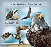 Central Africa 2015 Fauna  Bald Eagle - Central African Republic