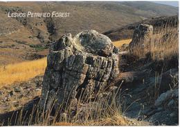 GRECE - LESVOS PETRIFIED FOREST - Grèce