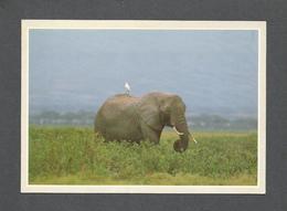 ANIMAUX - ANIMALS - ÉLEPHANT - AFRICAN ELEPHANT - Éléphants
